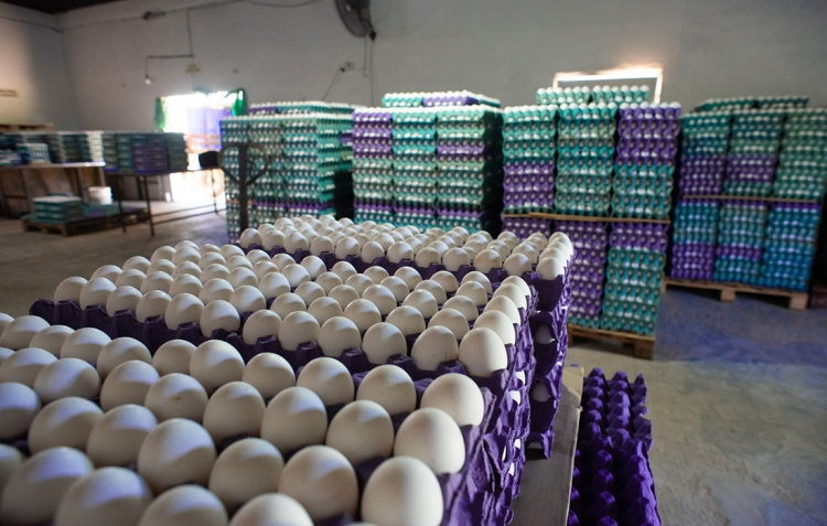 huevos-02
