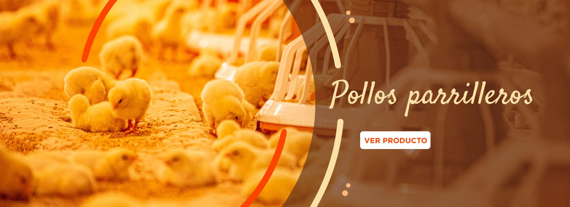 CyB-Slides-Pollos